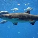 stockvault-atlanta-aquarium111563-150×150 13